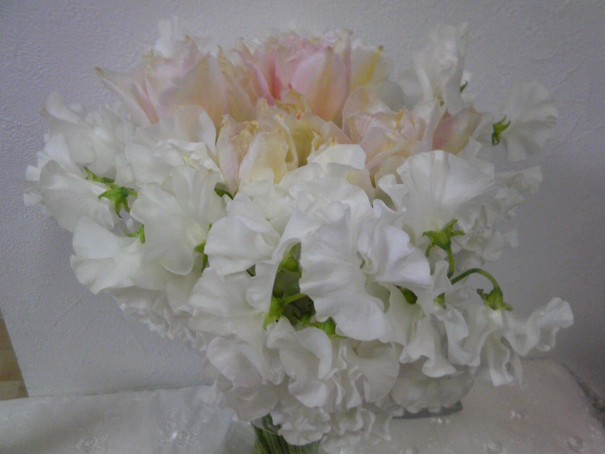 白いスイ−トピ−